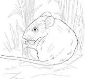 deer mouse coloring page cute deer mouse coloring page free printable coloring pages