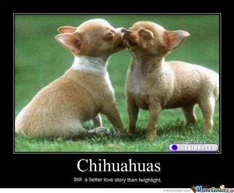Chihuahua Meme - funny chihuahua memes