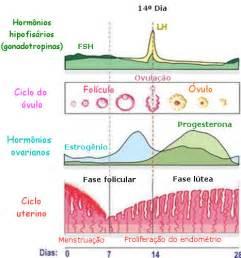 Calendario Hormonal Ciclo Menstrual E Hormonios