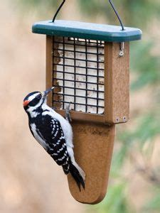 wild birds unlimited hairy woodpecker vs downy