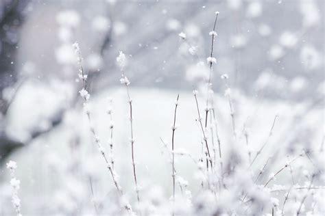 imagenes invierno movimiento ayurvedica vida invierno