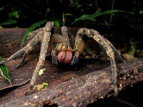 Dangerous 1 2t homework 5 types of the most dangerous spider