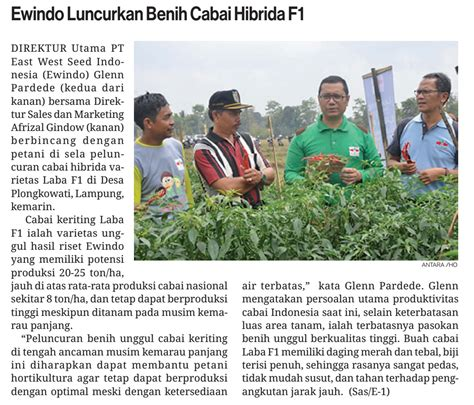 Benih Cabai Hibrida ewindo luncurkan benih cabai hibrida f1