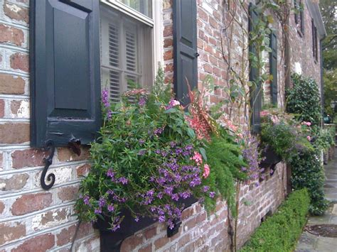 best window boxes 11 of the best flowers for window boxes