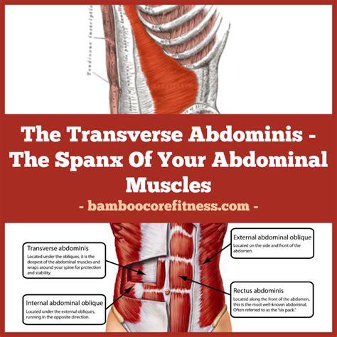 transverse abdominis  spanx   abdominal