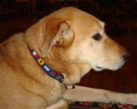 Jo In Leashes L skipjack s nautical living nautical collars leashes for