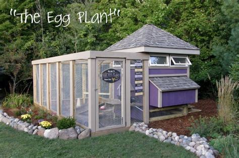 lada angolo quot the egg plant quot coop backyard chickens