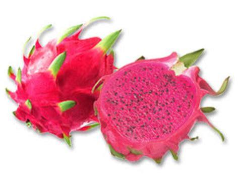 Sale Buah Naga Merah agriculture benefits of fruit hylocereus undatus