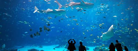 Atlanta Plan Source by Hotel Packages Visit Georgia Aquarium