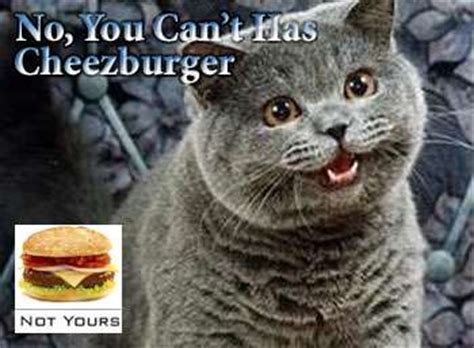 I Can Has Cheezburger Meme - meme musicals i can has cheezburger and lolcats take on