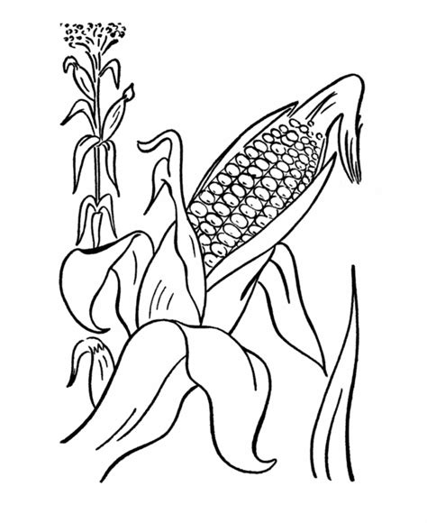 coloring page ear of corn ear of corn coloring page coloring home