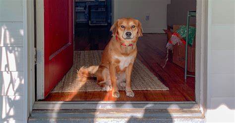 pet owner rights laws  keeping dogs  apartments  india wagr blog