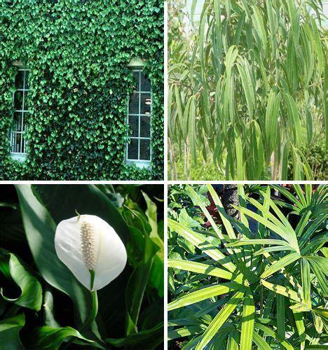 air purify plants ideas  pinterest