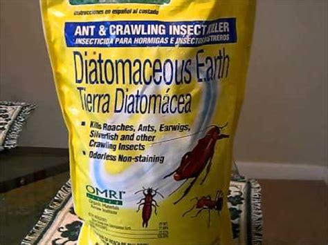 where to buy diatomaceous earth at thedoglogs