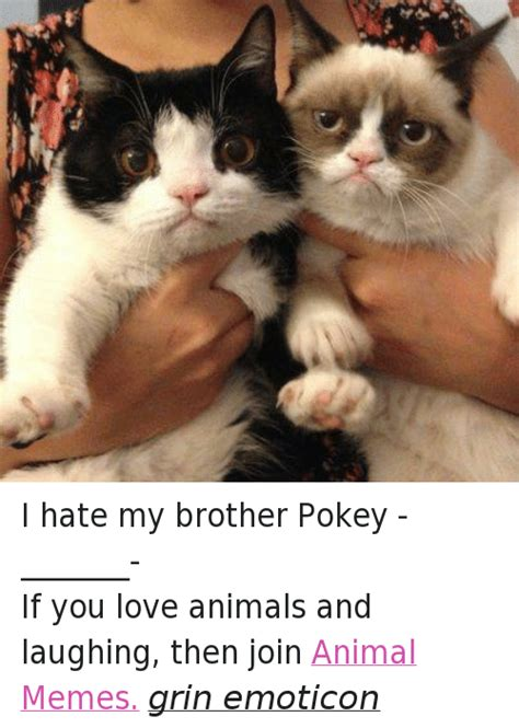 I Love My Brother Meme - i hate my brother pokey if you love animals and laughing then join animal memes grin