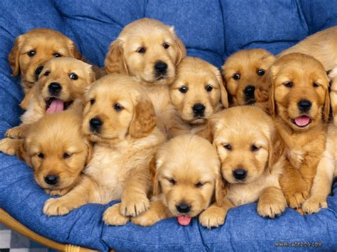 lots of puppies lots of dogs i my