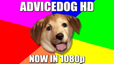 Know Your Meme Dog - image 298126 advice dog know your meme
