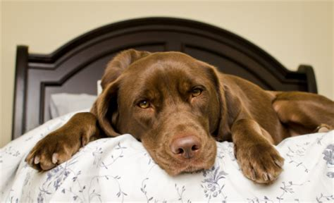 how much do puppies sleep at 12 weeks how do dogs sleep find out in this guide to canine sleeping habits