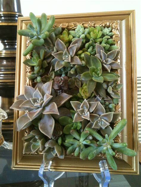17 Best Images About Succulent Frame On Pinterest Succulent Wall Garden For Sale
