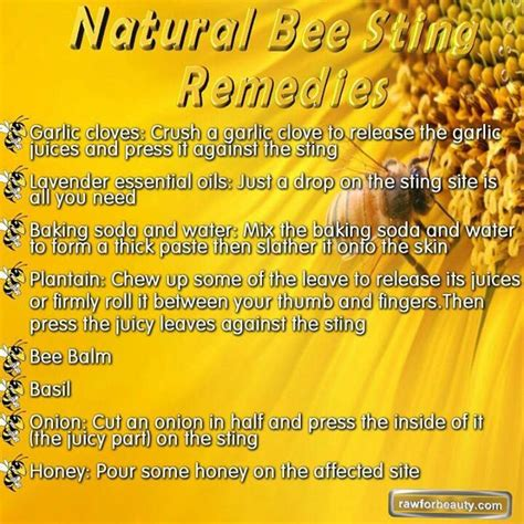 bee sting remedies health wellness fitness