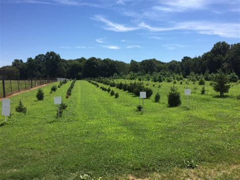 best 28 christmas tree farms tennessee raulston acres