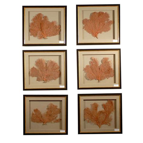 sea fan shadow box set of 6 original coral sea fans mounted in a shadow box