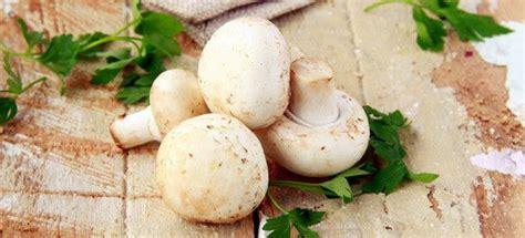 cucinare funghi freschi come cucinare funghi freschi cucinarefunghi