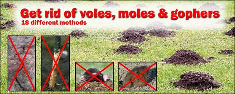 how to get rid of voles moles gophers mn animal