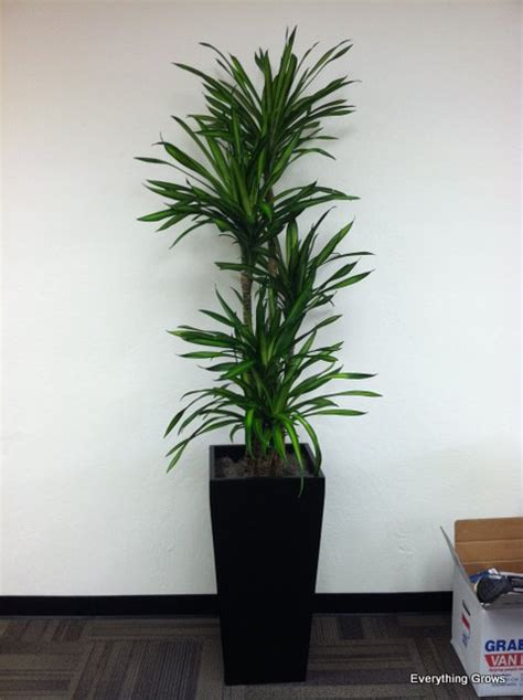 best plants for office everything grows december 2011