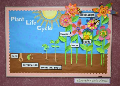 garden decoration cycle plant cycle plant cycle bulletin