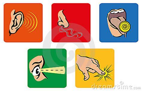 imagenes de organos sensoriales los cinco sentidos