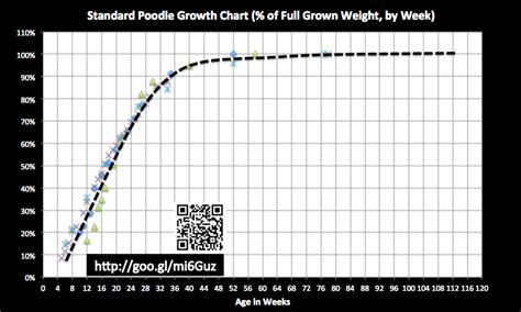 goldendoodle puppy growth chart standard poodles ohio pkhowto
