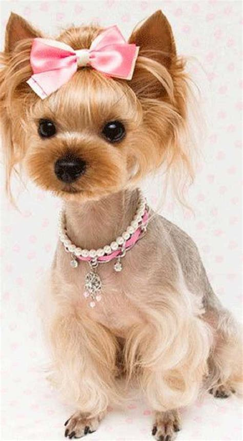 cute yorkie photos haircuts cute yorkie haircuts different yorkshire terrier