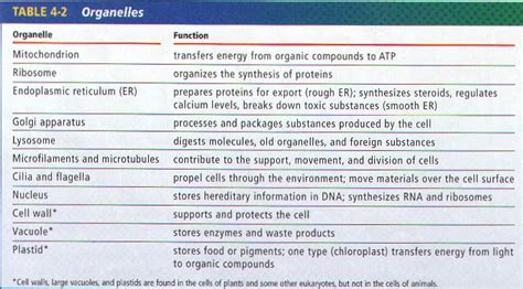cell structure function notes  stewarts biology class