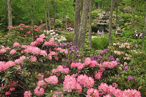 Mid Coast Botanical Gardens Maine Coastal Maine Botanical Gardens Maine S Midcoast Regions