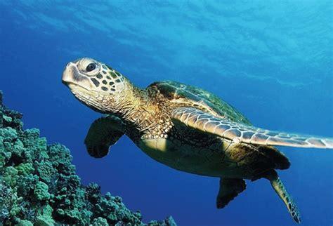 imagenes de animales endemicos 10 animales en peligro de extinci 243 n hotbook