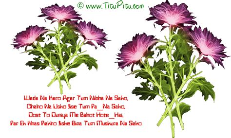 flower wallpaper with shayari february 2013 titu pitu hindi jokes funny sms sad