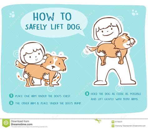 how to safely lift and carry large dog stock vector image 61190231