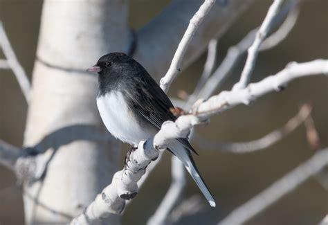 randall davey audubon sanctuary santa fe nm wings over