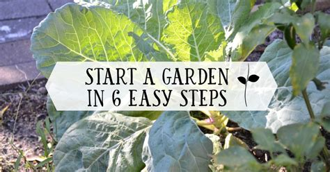 Starting A Backyard Nursery by Start Your Own Garden In 6 Ridiculously Easy Steps