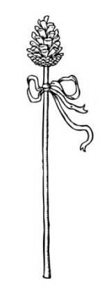 Lotus Tipped Staff Thyrsus