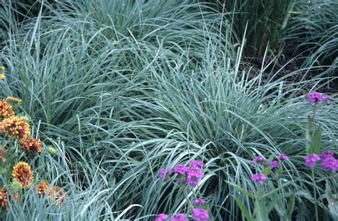 shade tolerant ornamental grasses and grass like plants