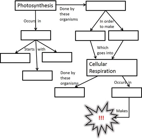 Cellular Respiration Worksheet by Photosynthesis And Cellular Respiration Activities Middle