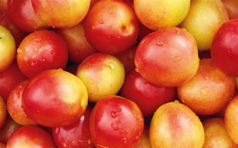 wallpaper apple fruit apple wallpapers free download