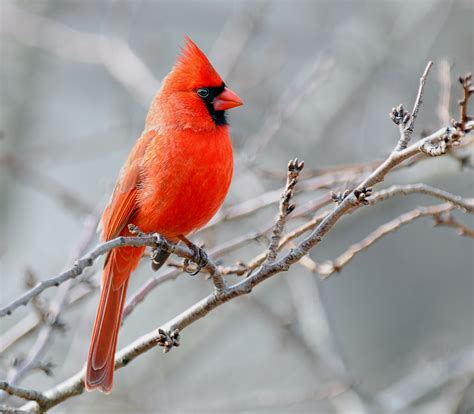 The Cardinal Detoxes by It S Best To See If You Re A Bird Cosmos