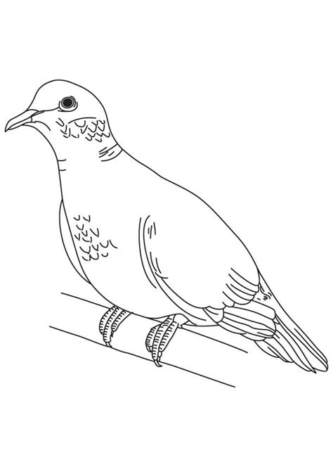 Mourning Dove Coloring Page Download Free Mourning Dove Dove Coloring Page