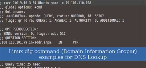 linux dig command domain information groper examples