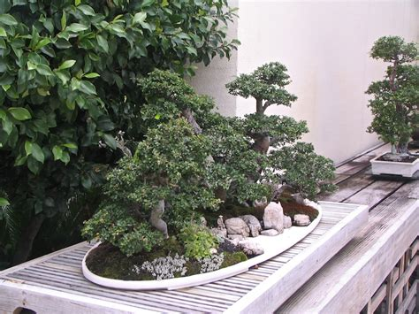 Bonsai Rock Garden Homify Garden Design Ideas 5 Bonsai Rock Garden