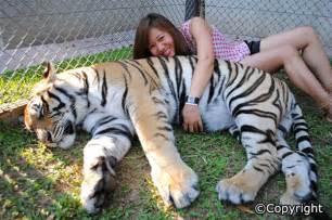 Pattaya tiger zoo pattaya short tours