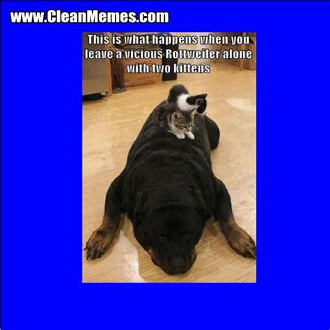 Clean Animal Memes - clean animal memes 28 images clean animal memes funny